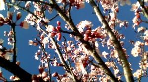 Primavera 2012
